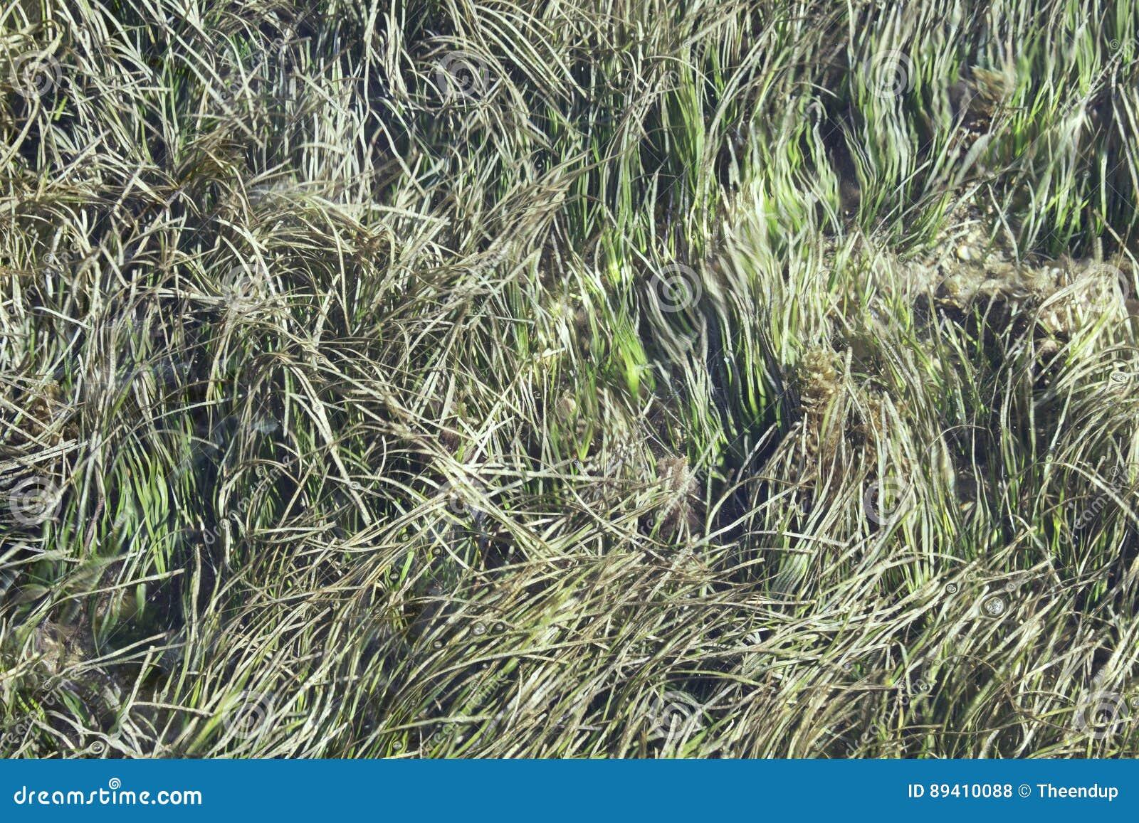 Opinião superior a alga