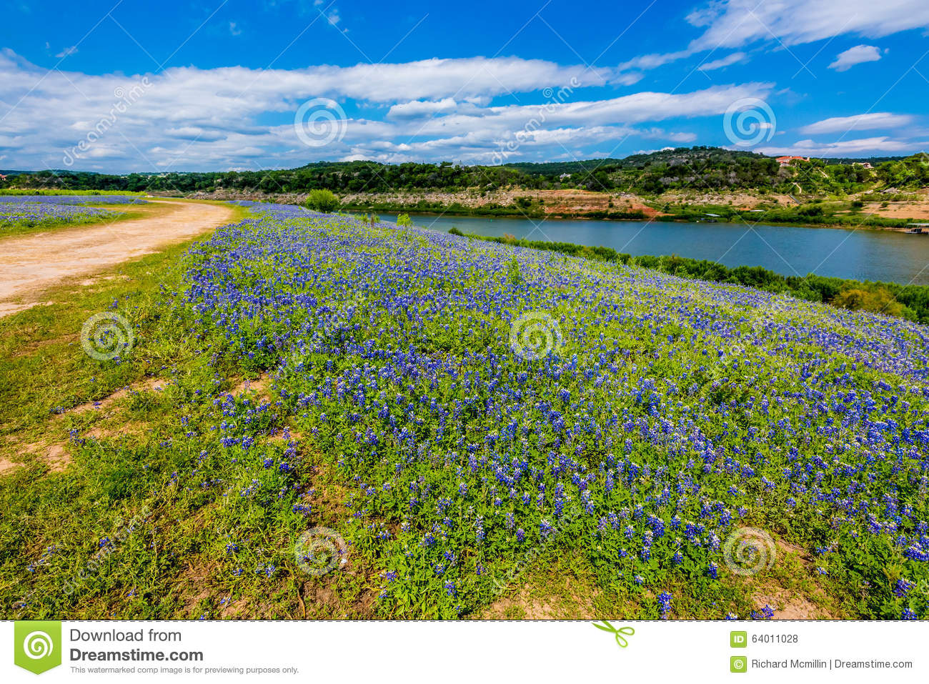 Opinião Texas Bluebonnet Wildflowers famoso no Colorado Riv