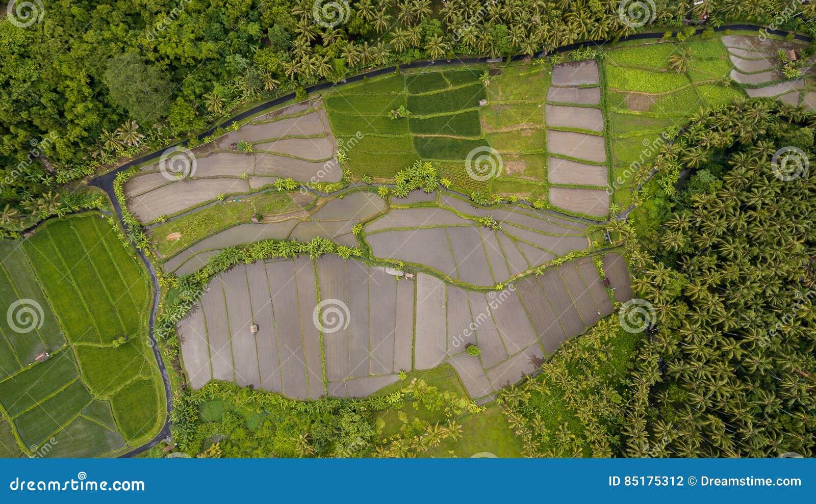 Opinión aérea del campo del arroz