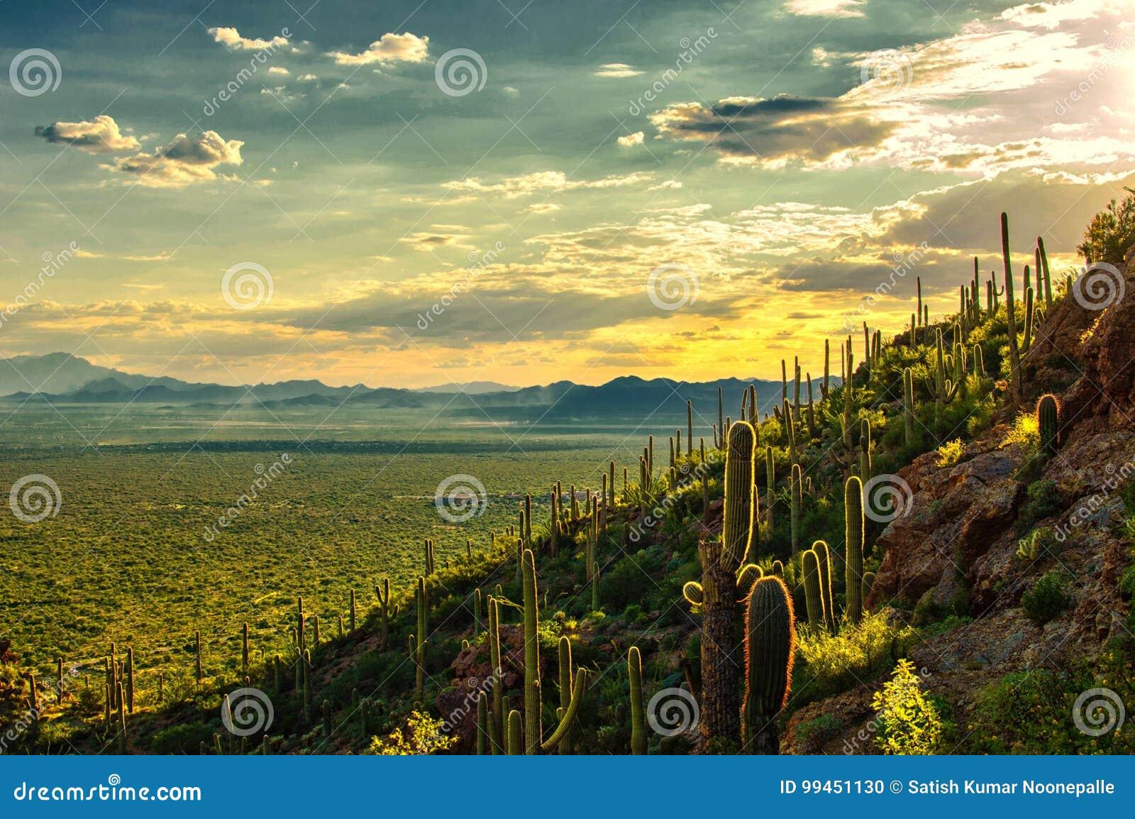 Opinión de la puesta del sol del desierto de Sonoran del parque de la montaña de Tucson, Tucson AZ