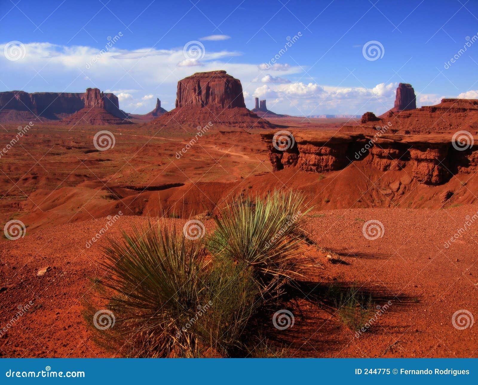 Opinión del desierto