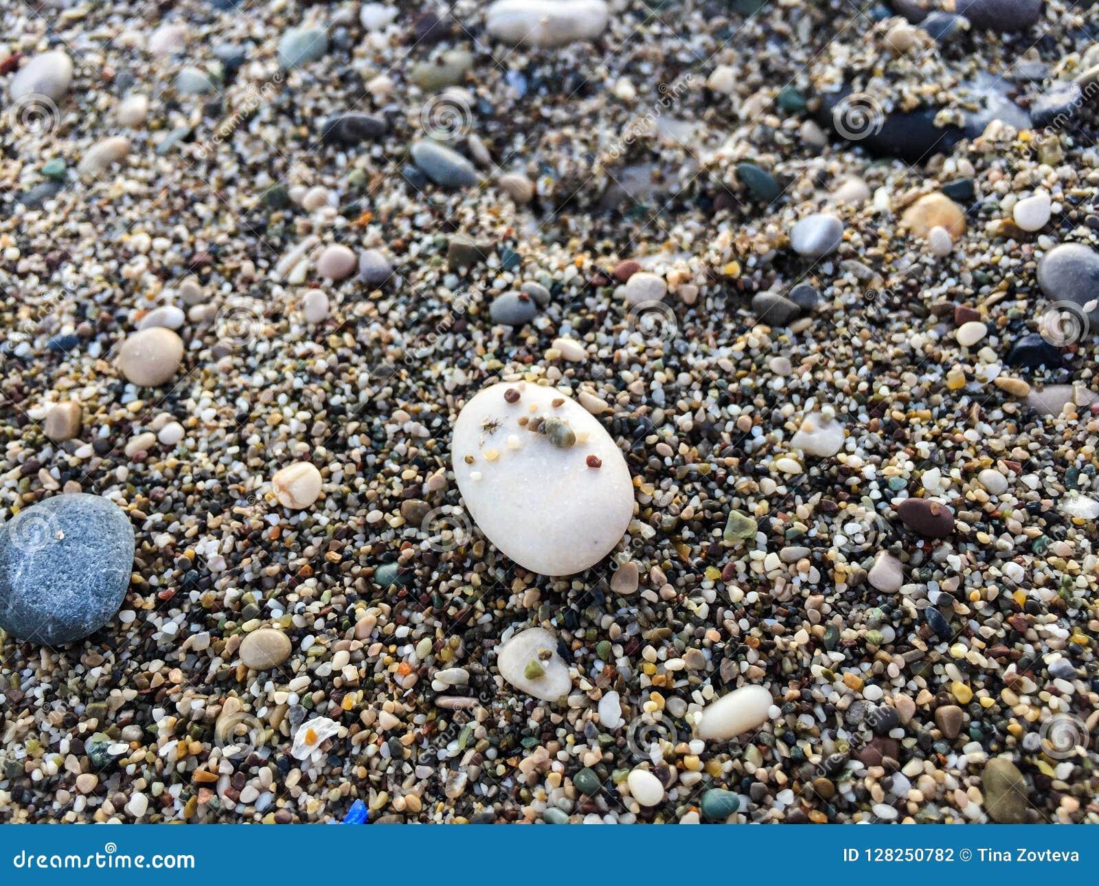 Opinión del fondo de la playa rocosa