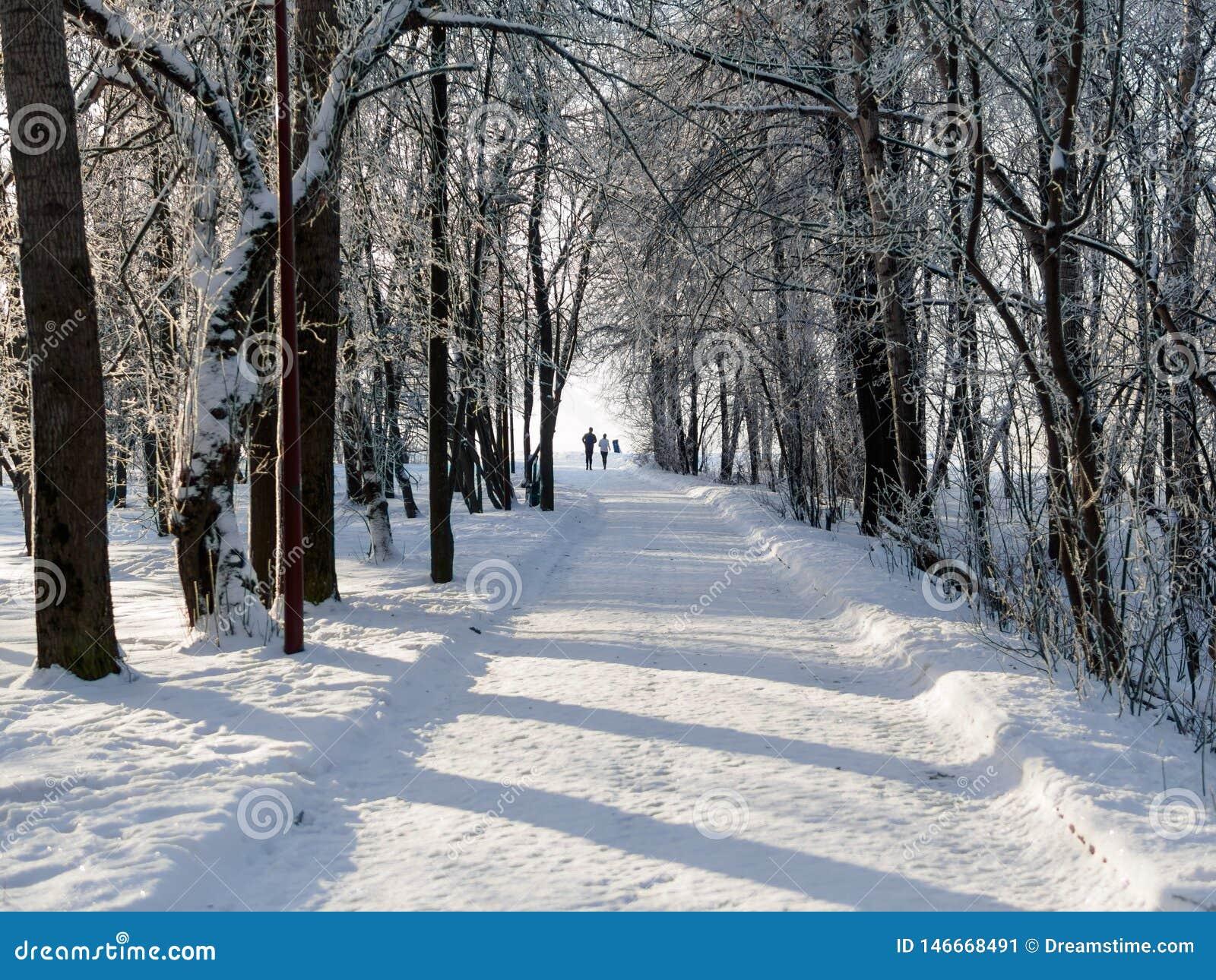 Opinión del invierno del callejón en el parque en ciudad grande