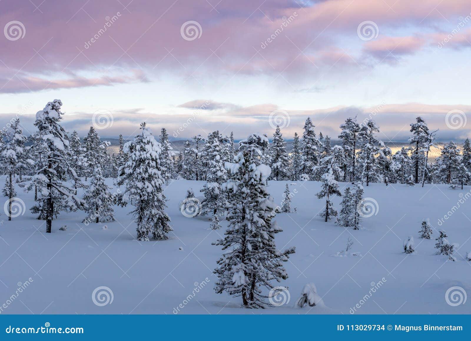 Opinión del invierno de un parque nacional en las montañas en Suecia