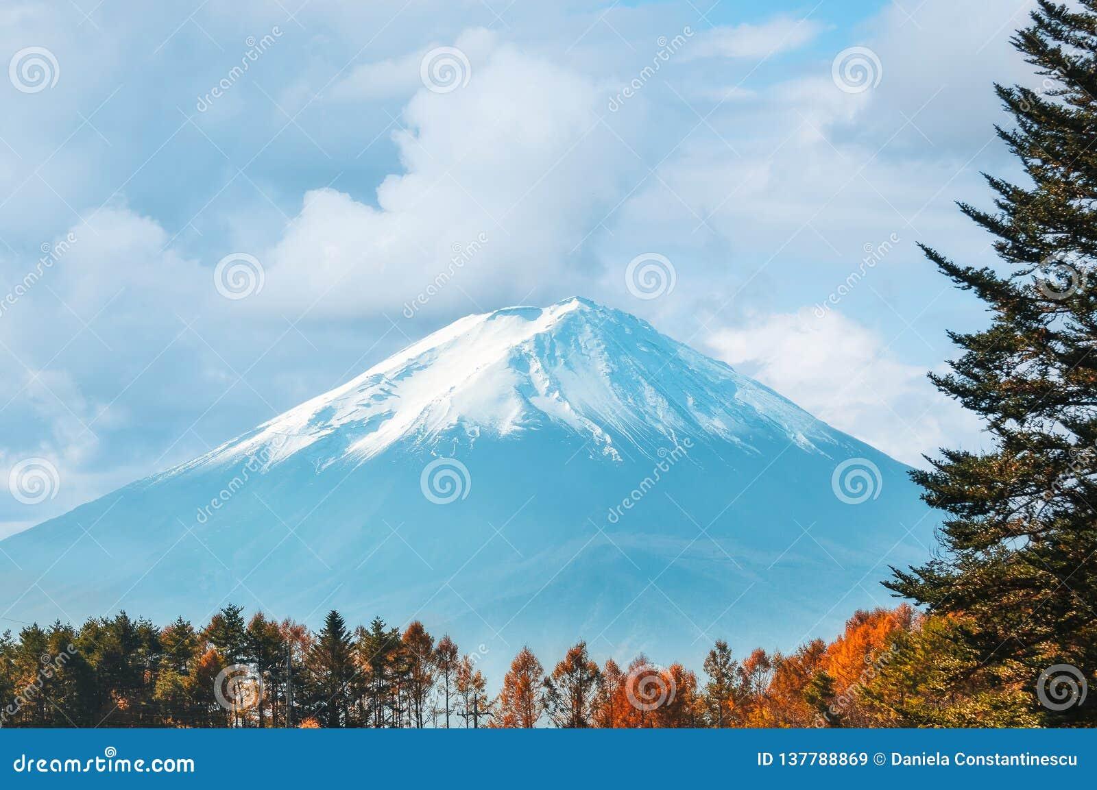 Opinión del monte Fuji con el casquillo de la nieve y los árboles forestales legendarios en el primero plano