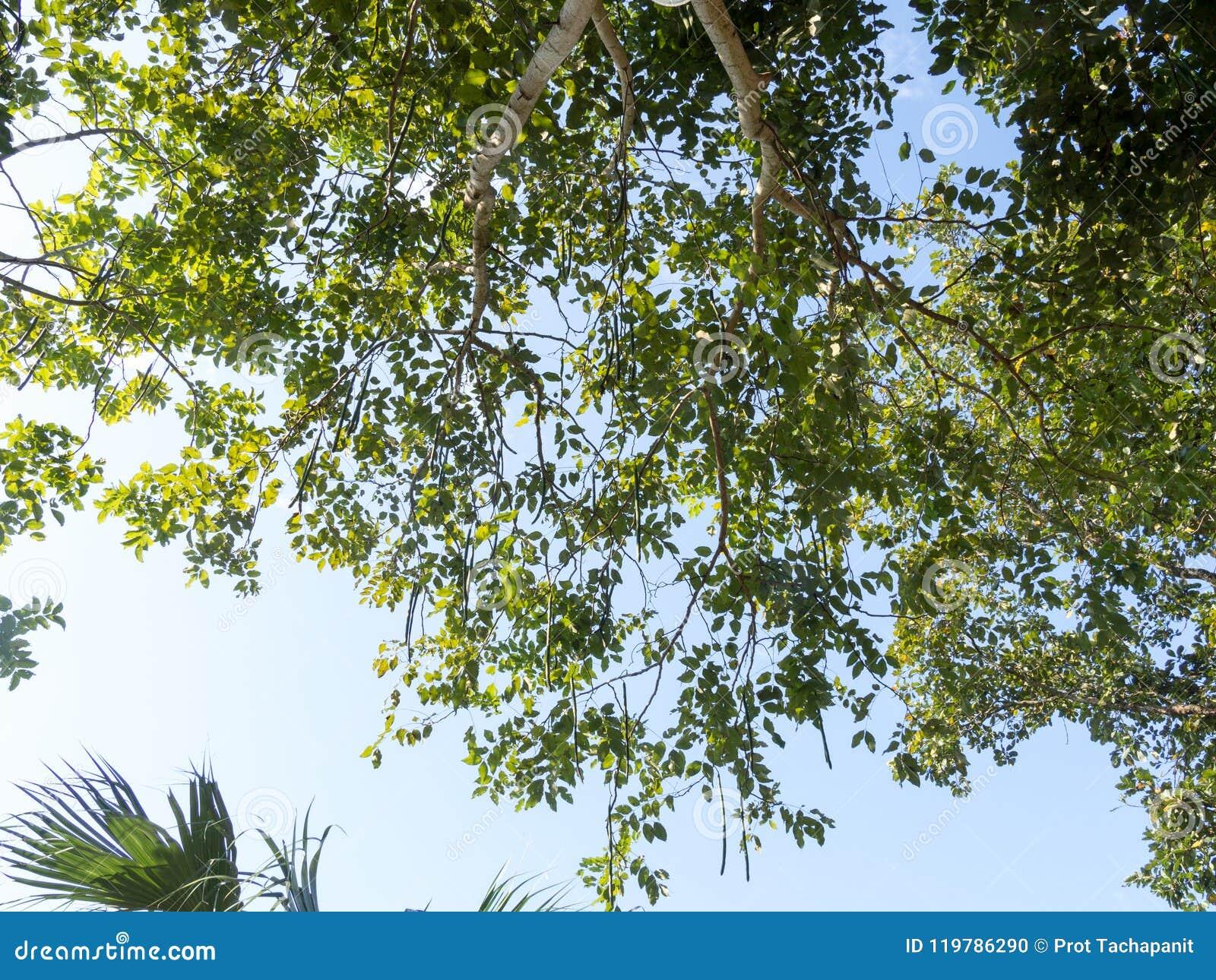 Opinión Del Ojo De La Hormiga Del árbol Debajo De La Sombra De Un