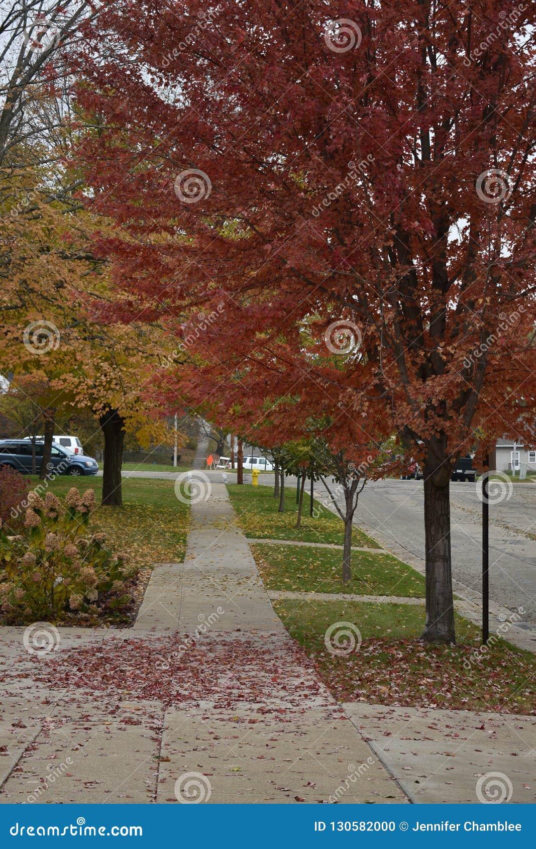 Opinión del otoño de una calle en una pequeña ciudad en otoño con caer coloreada de las hojas