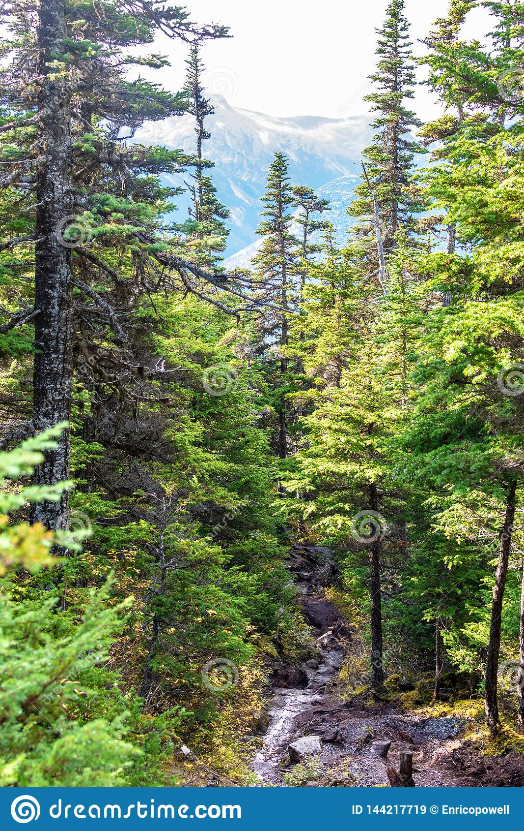 Opinión del paisaje de una corriente rodeada por los árboles y las montañas alpinos en el fondo