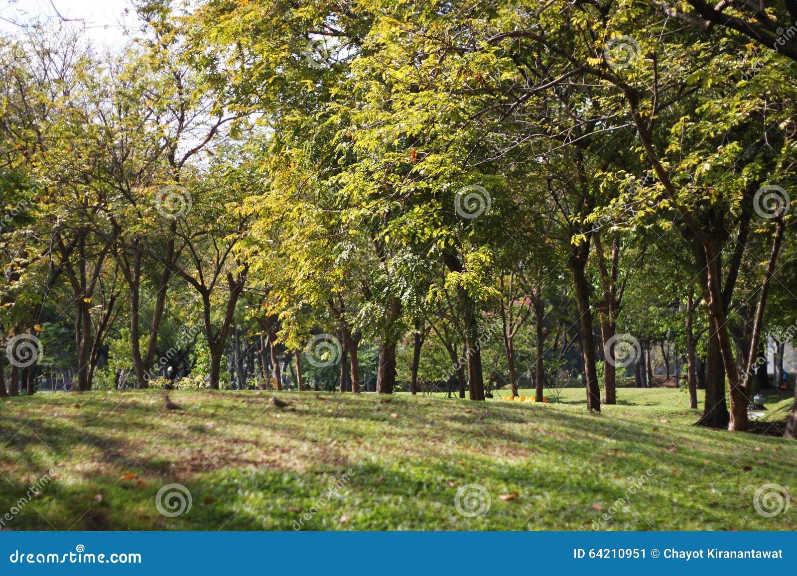 Opinión del paisaje del parque público de la mañana