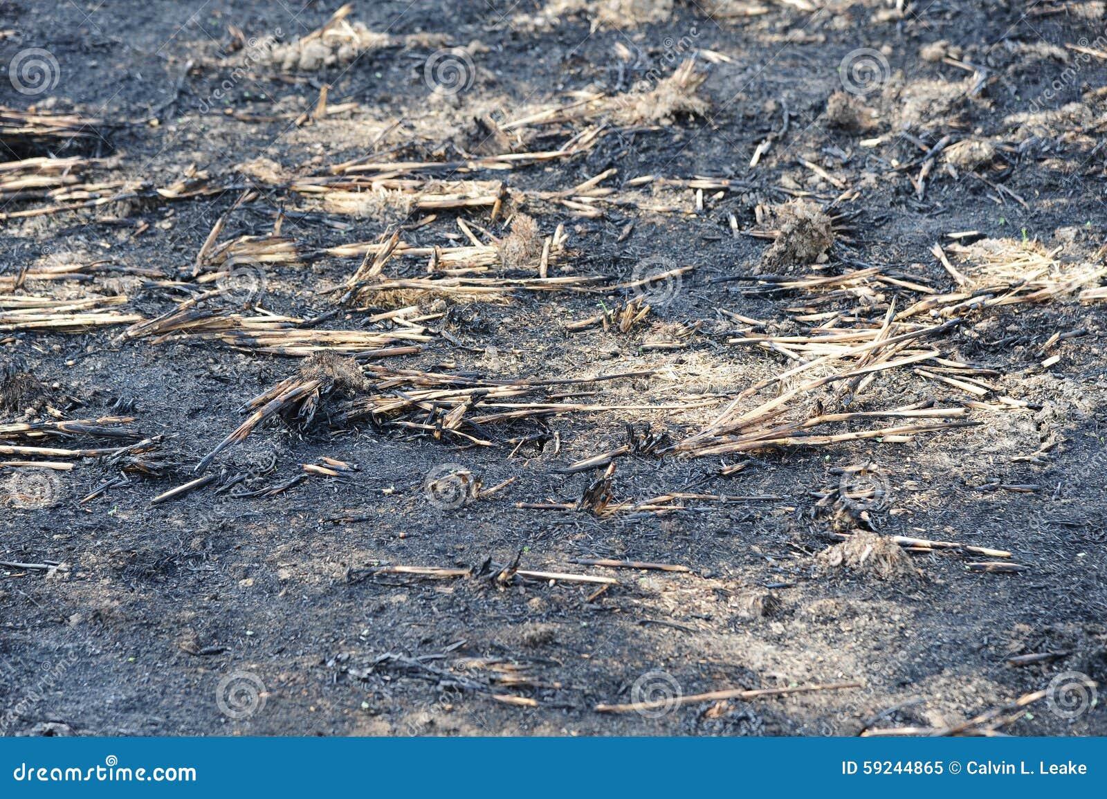 Download Opinión Del Primer De Un Campo Que Se Ha Quemado Para Despejar Residuo De La Cosecha Imagen de archivo - Imagen de producción, claro: 59244865