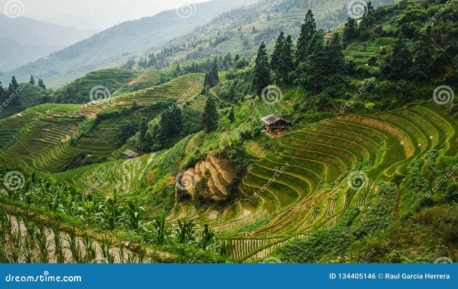 Opinión hermosa del paisaje de las terrazas y de la casa del arroz Terrazas del arroz de Longsheng China