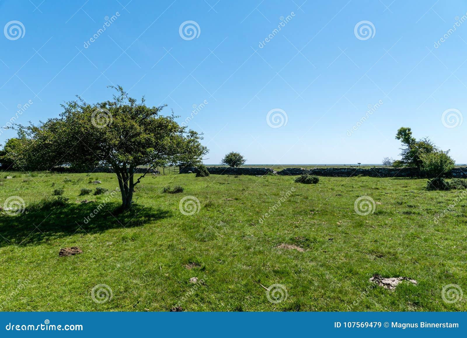 Opinión hermosa del verano del extremo sur de las salidas de la Ã-tierra de la isla