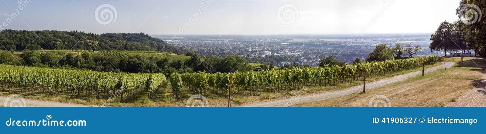 Opinión panorámica del viñedo
