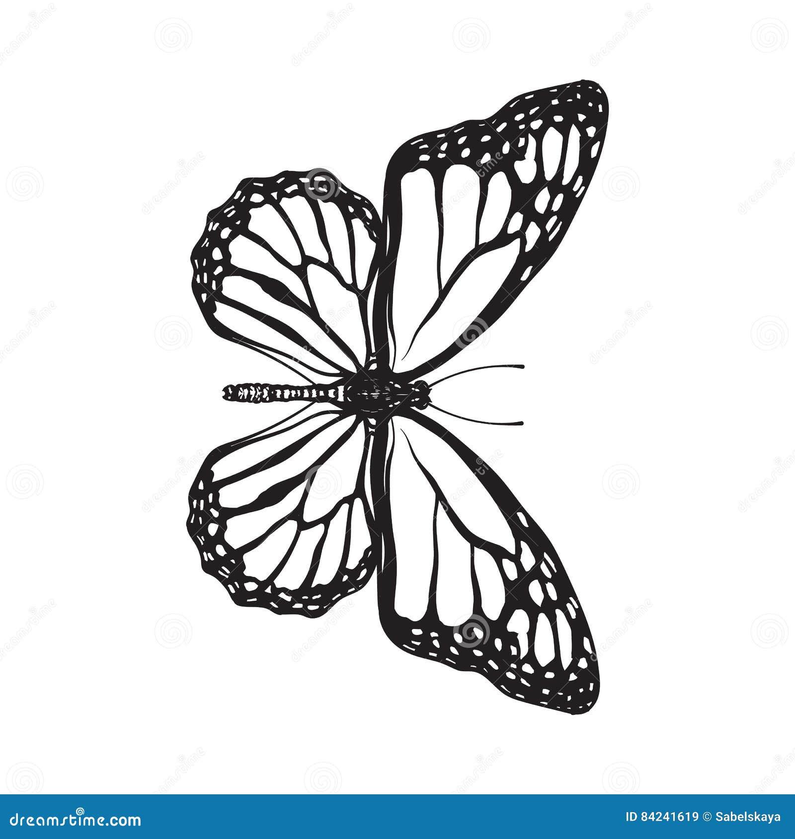 Opinión superior la mariposa de monarca hermosa, ejemplo aislado del estilo del bosquejo