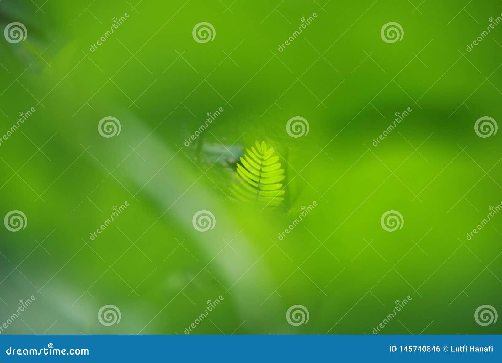 Opini?n de la naturaleza del primer de la hoja verde en jard?n en el verano bajo luz del sol
