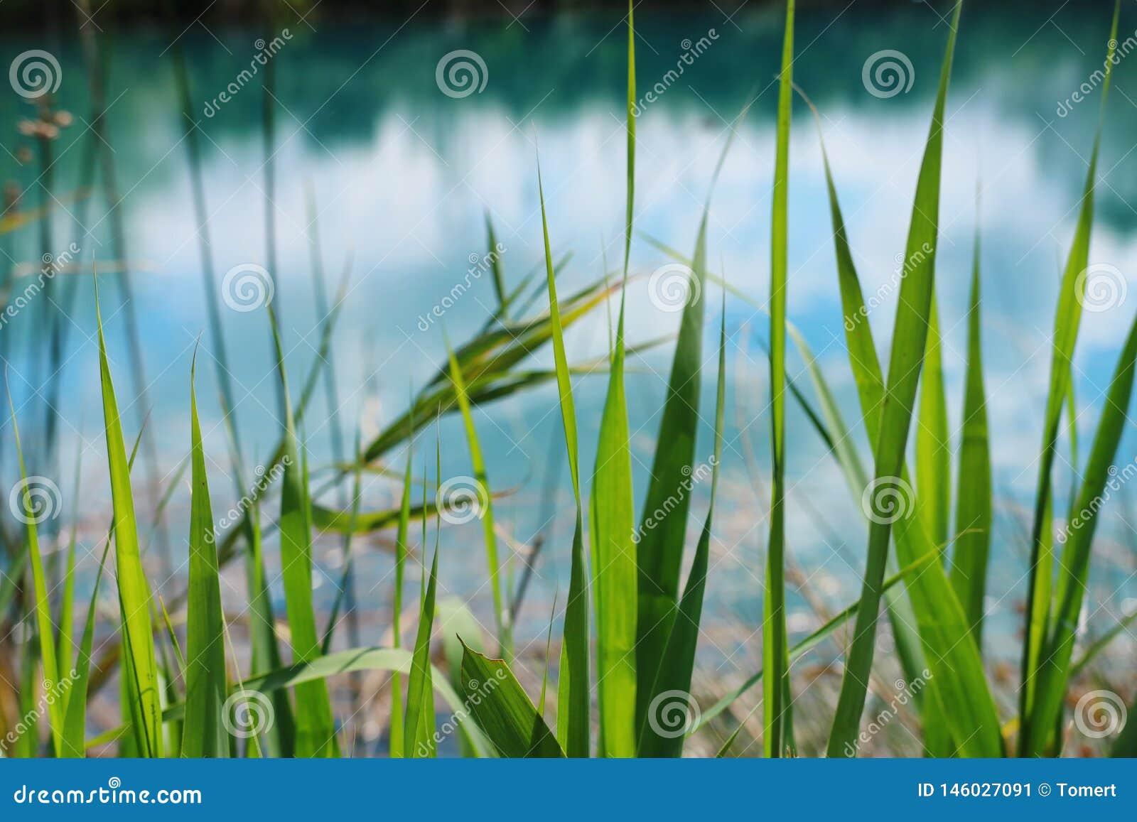 Opini?n de ?ngulo bajo la hierba fresca concepto de la libertad y de la renovaci?n