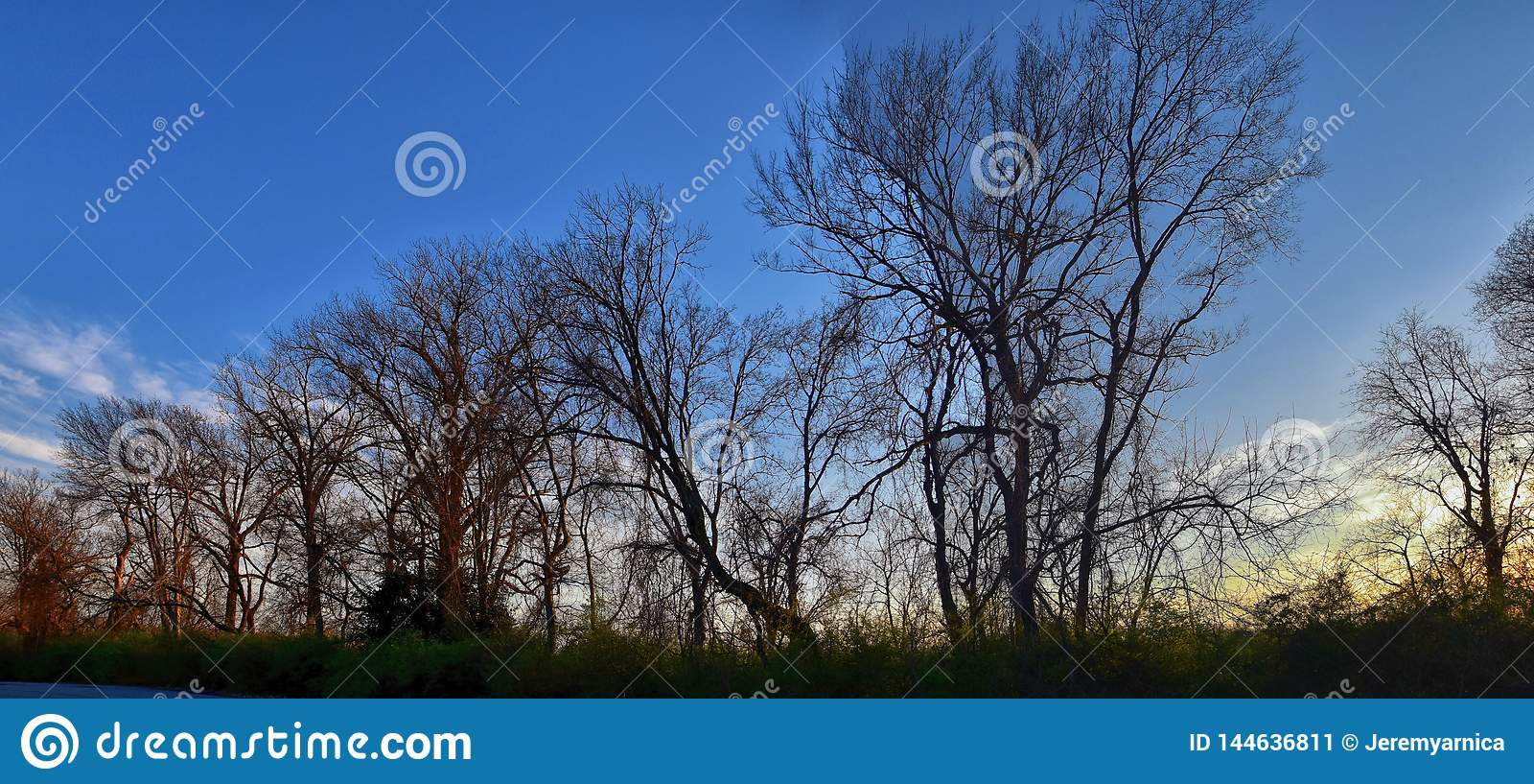 Opiniones de la puesta del sol de la oscuridad a través de ramas de árbol del invierno por Opryland a lo largo de Shelby Bottoms