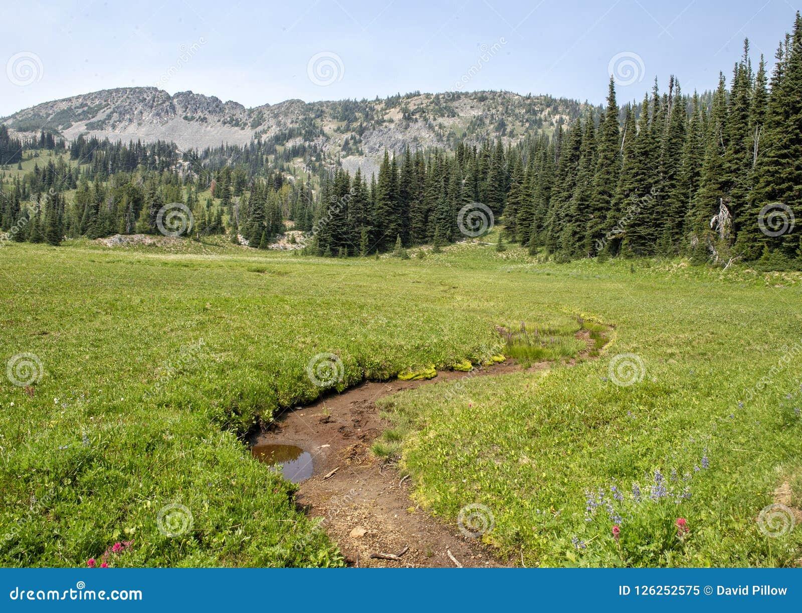 Opisana jest łąka w góra Dżdżystym parku narodowym, Waszyngton