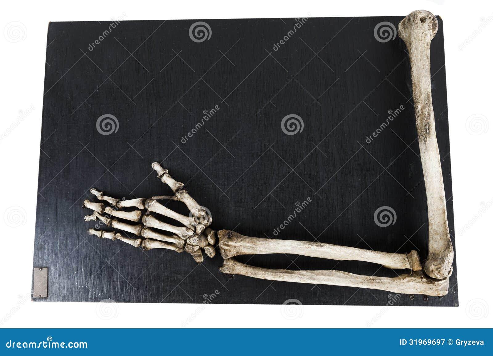 Opleidingsmodel met de beenderen van de menselijke handclose-up