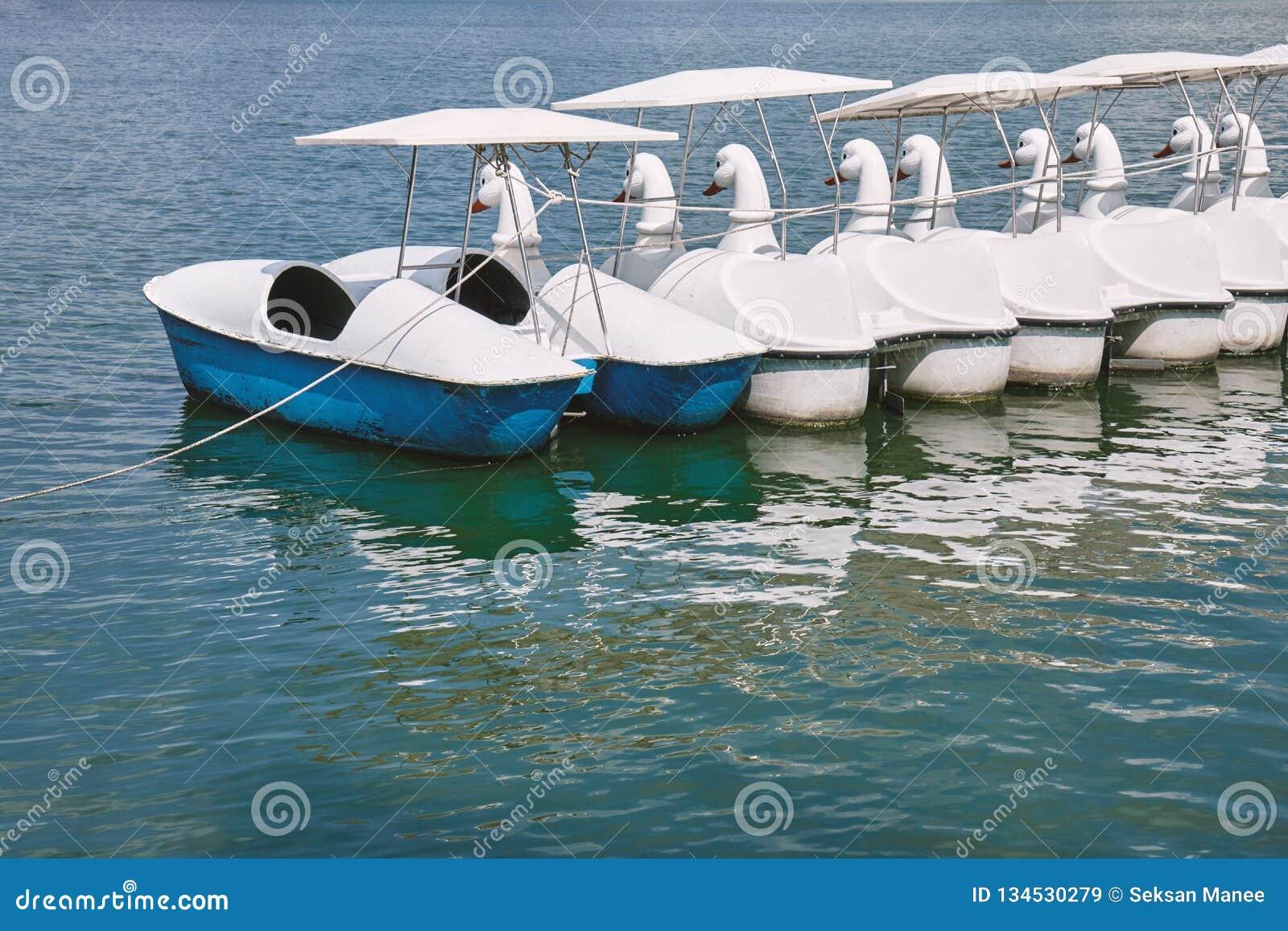 Opróżnia pedałowe łabędzie łodzie unosi się w jeziorze jawny park