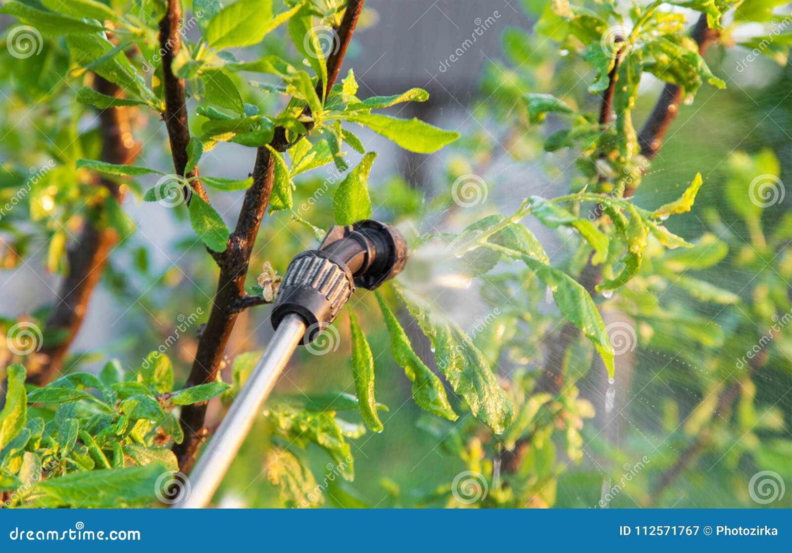 Opryskiwań drzewa z pestycydami