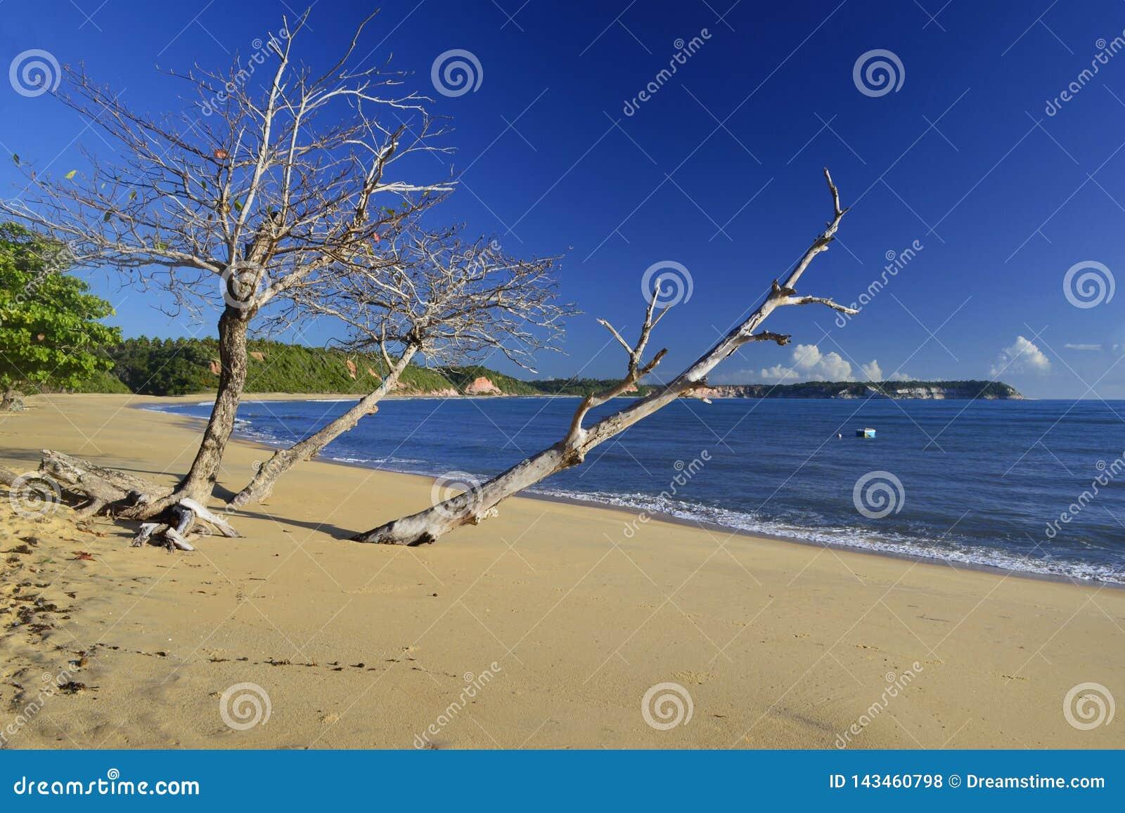 Opustoszała plaża w Brazil iść drewnianą łodzią