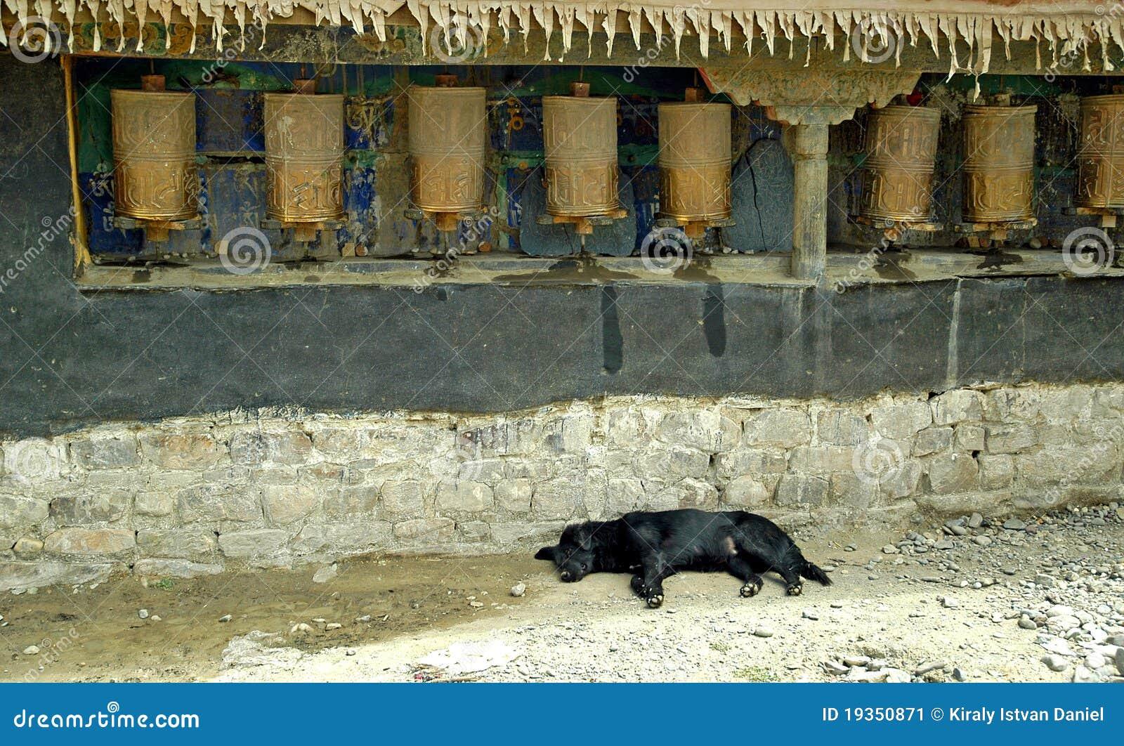 A oração roda dentro Tibet com cão