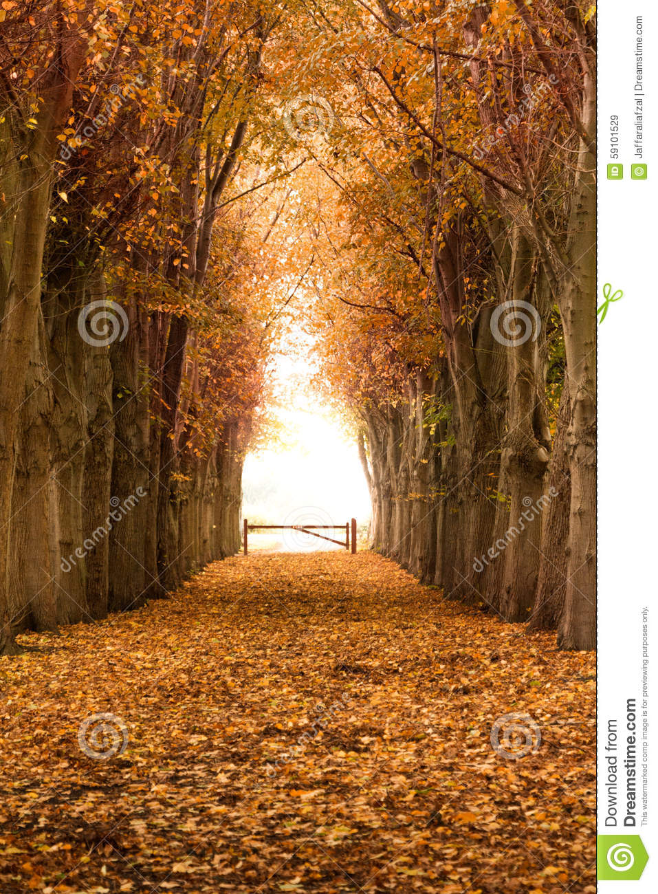 Orange autumn and fall forest pathway stock photo image for Ideanature