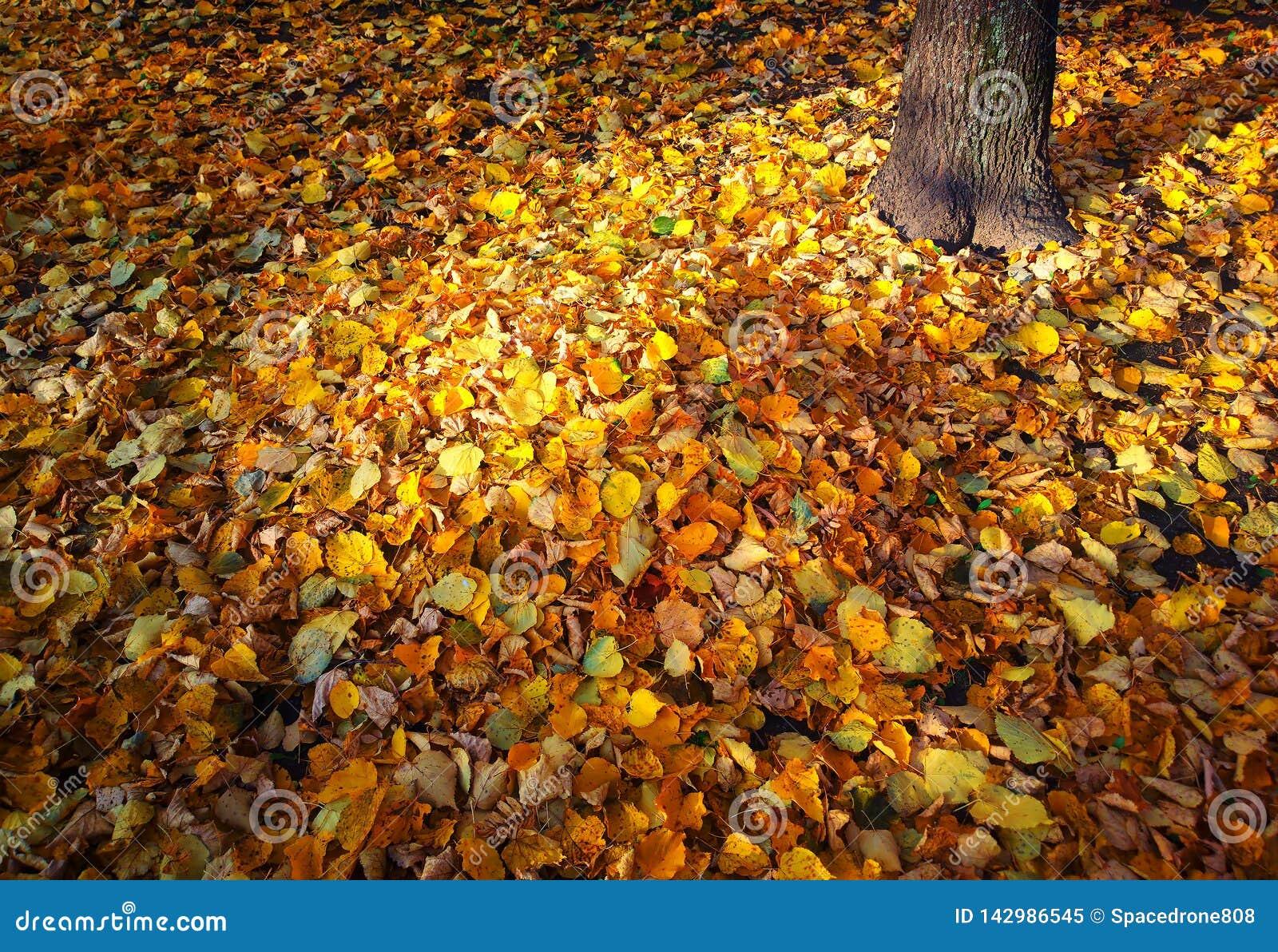 Orange Autumn Leaves Carpet Background Stock Image Image