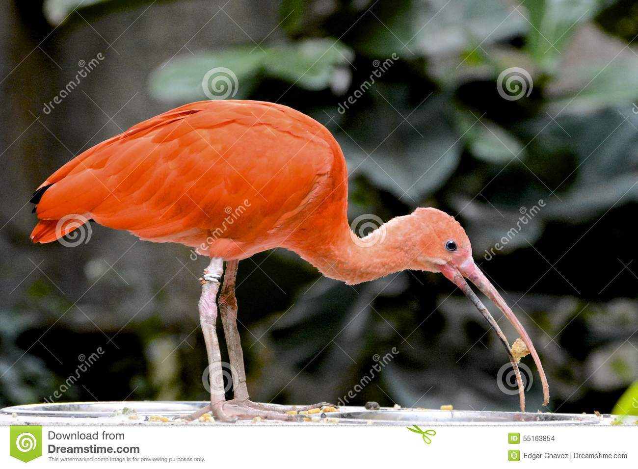 Orange Bird stock photo. Image of lunch, beak, long ...