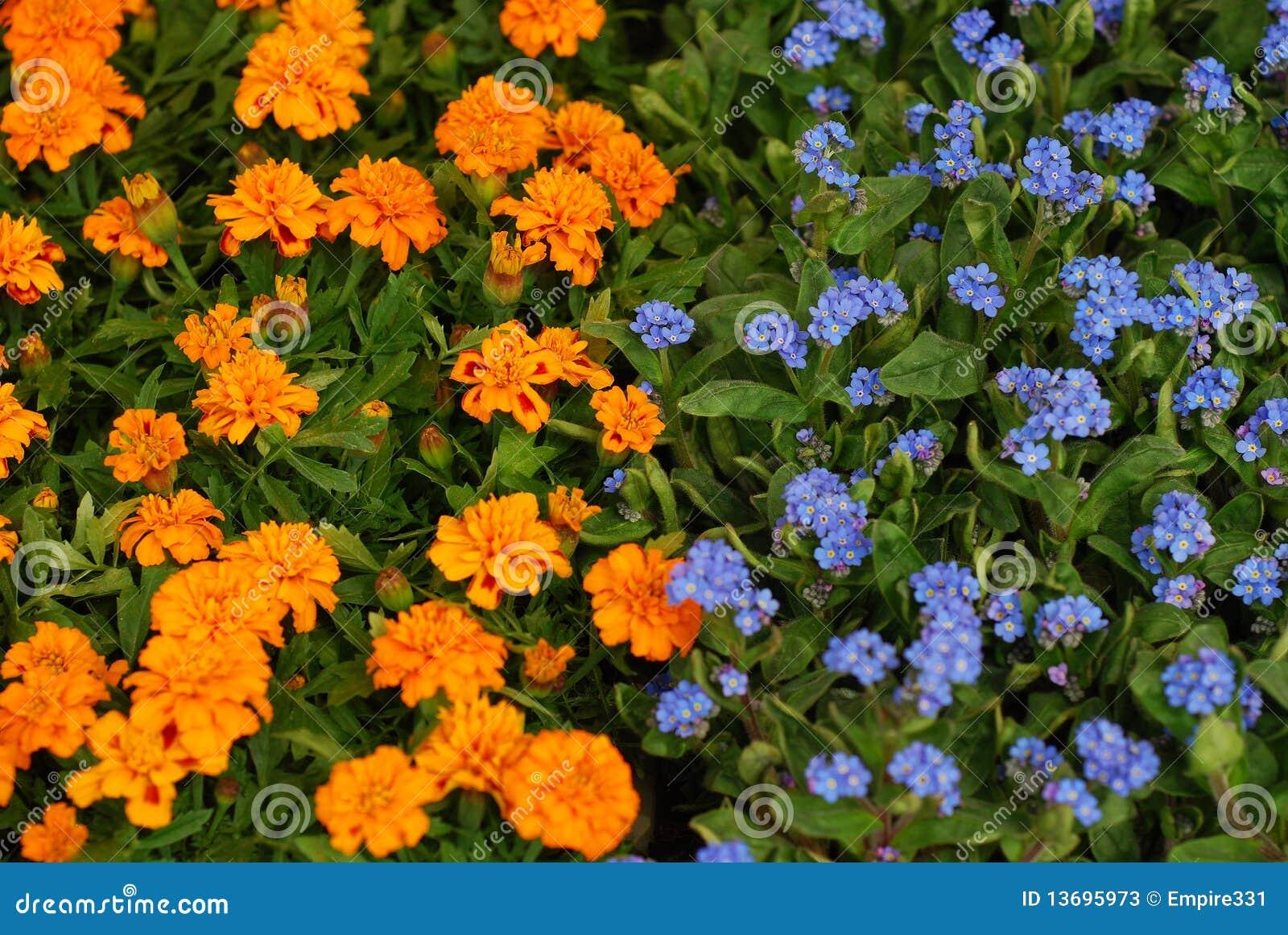 Orange And Blue Flowers Stock Photos - Image: 13695973