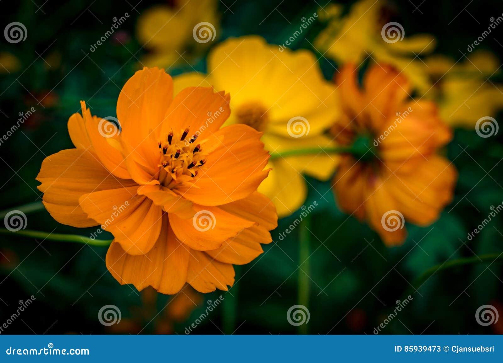 Orange Blume auf grünen Blättern