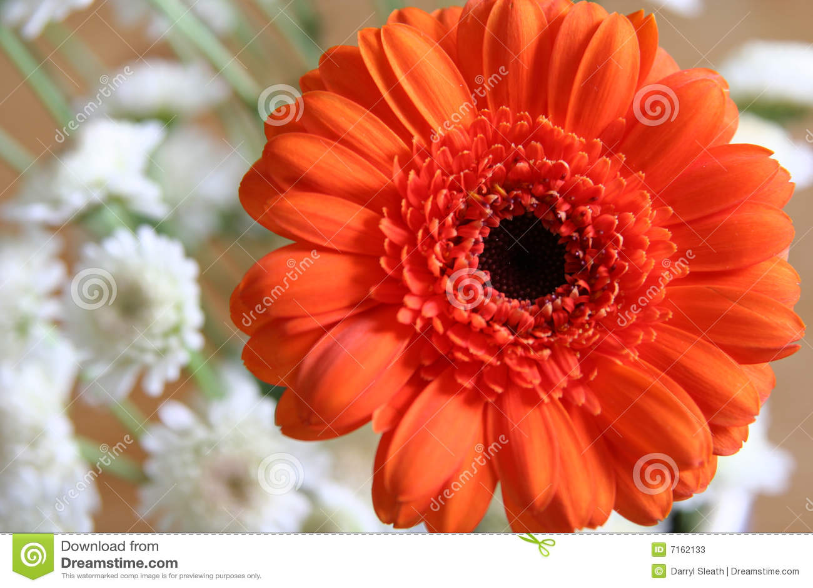 Orange Blume mit kleinen weißen Blüten