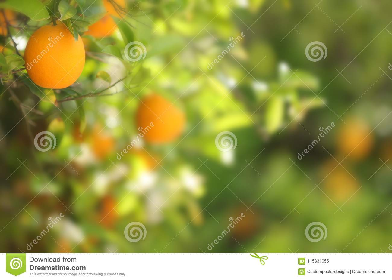 An orange with a blurred background.