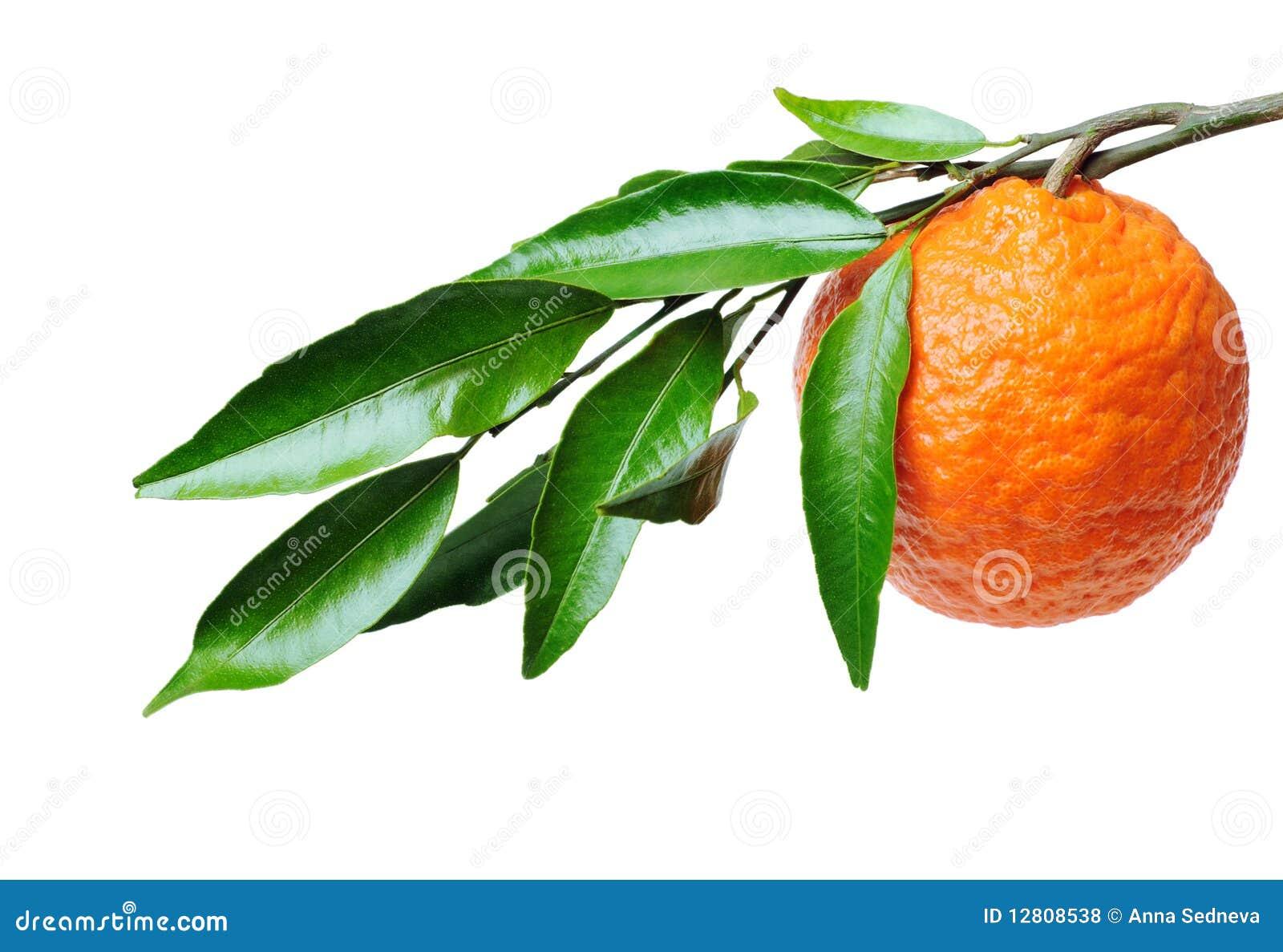 Orange Branch Stock Photo Image Of Peel Horizontal 12808538