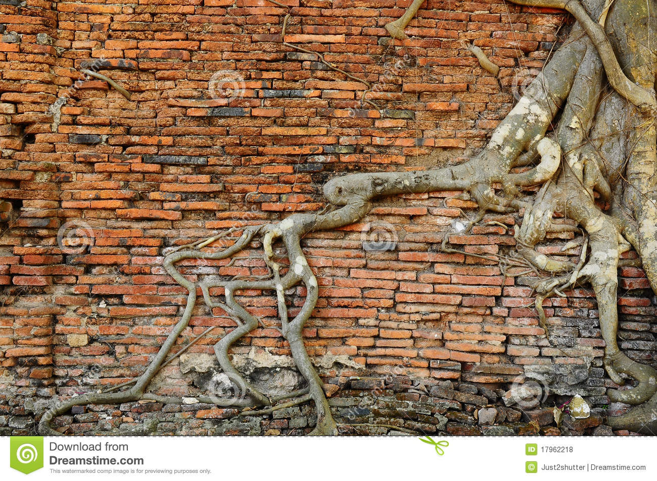 Rock Solid Concrete >> Orange Brick Wall With Ancient Root Tree Royalty Free ...