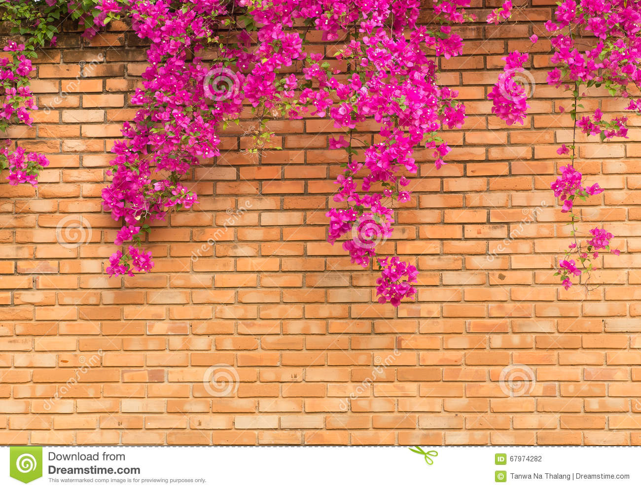 Orange Brick Wall With Pink Flowers Texture Background Stock Photo