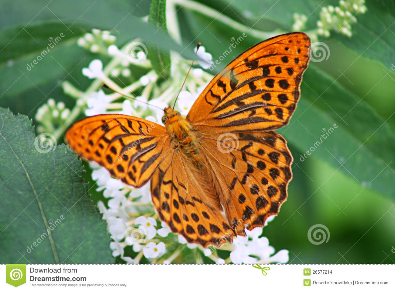 Orange Butterfly Stock Images - Image: 26577214
