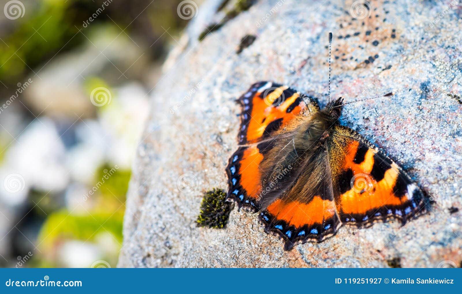 Orange butterfly on a rock