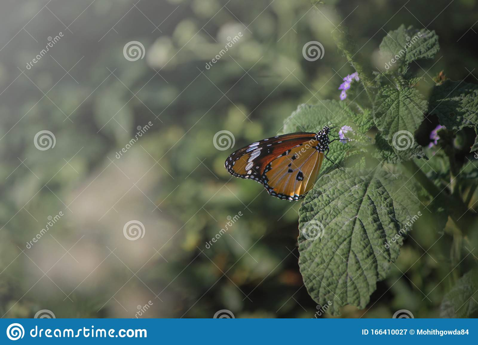 Orange Butterfly With Black And White Spots Sitting On Green Leaf Stock Image Image Of Color Leaf 166410027