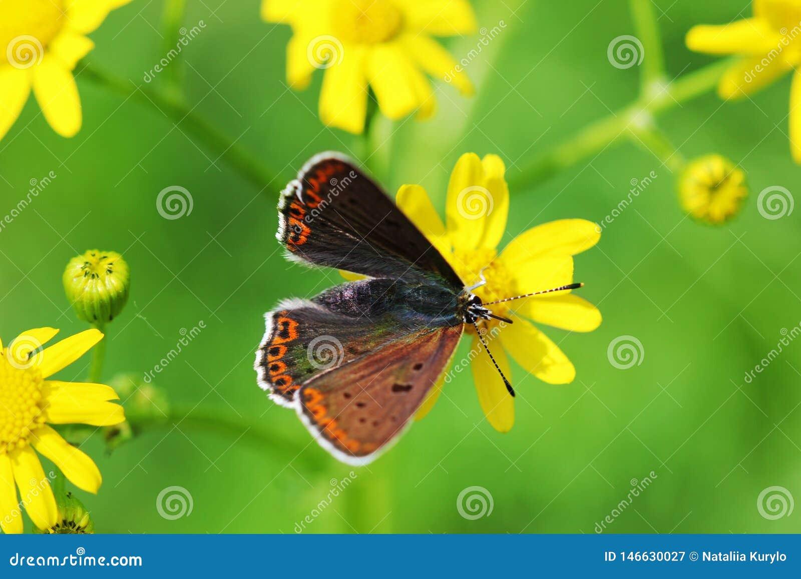 Orange butterfly on grass, macro