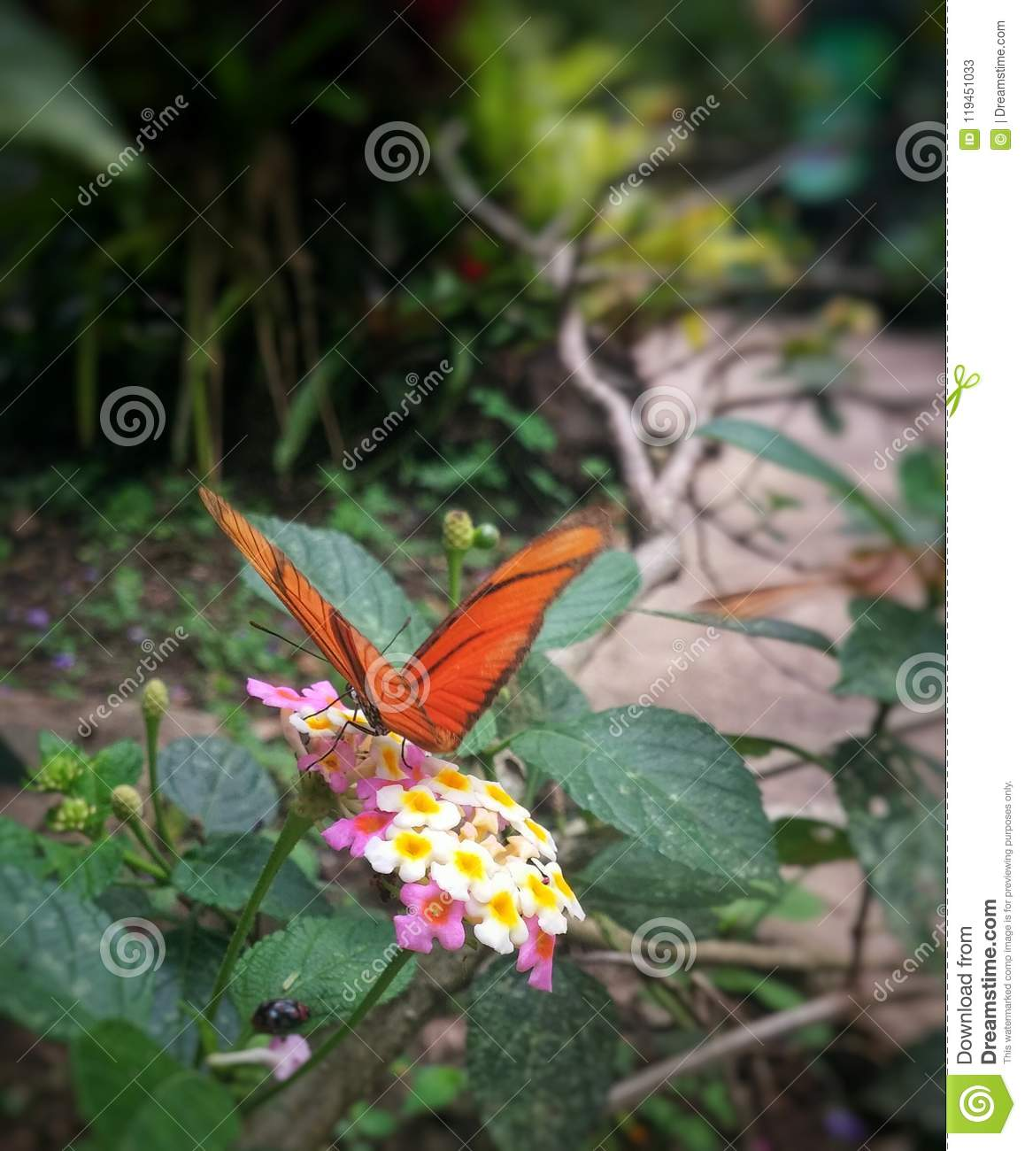 Orange Butterfly Perched On Small White And Pink Flowers Stock Image