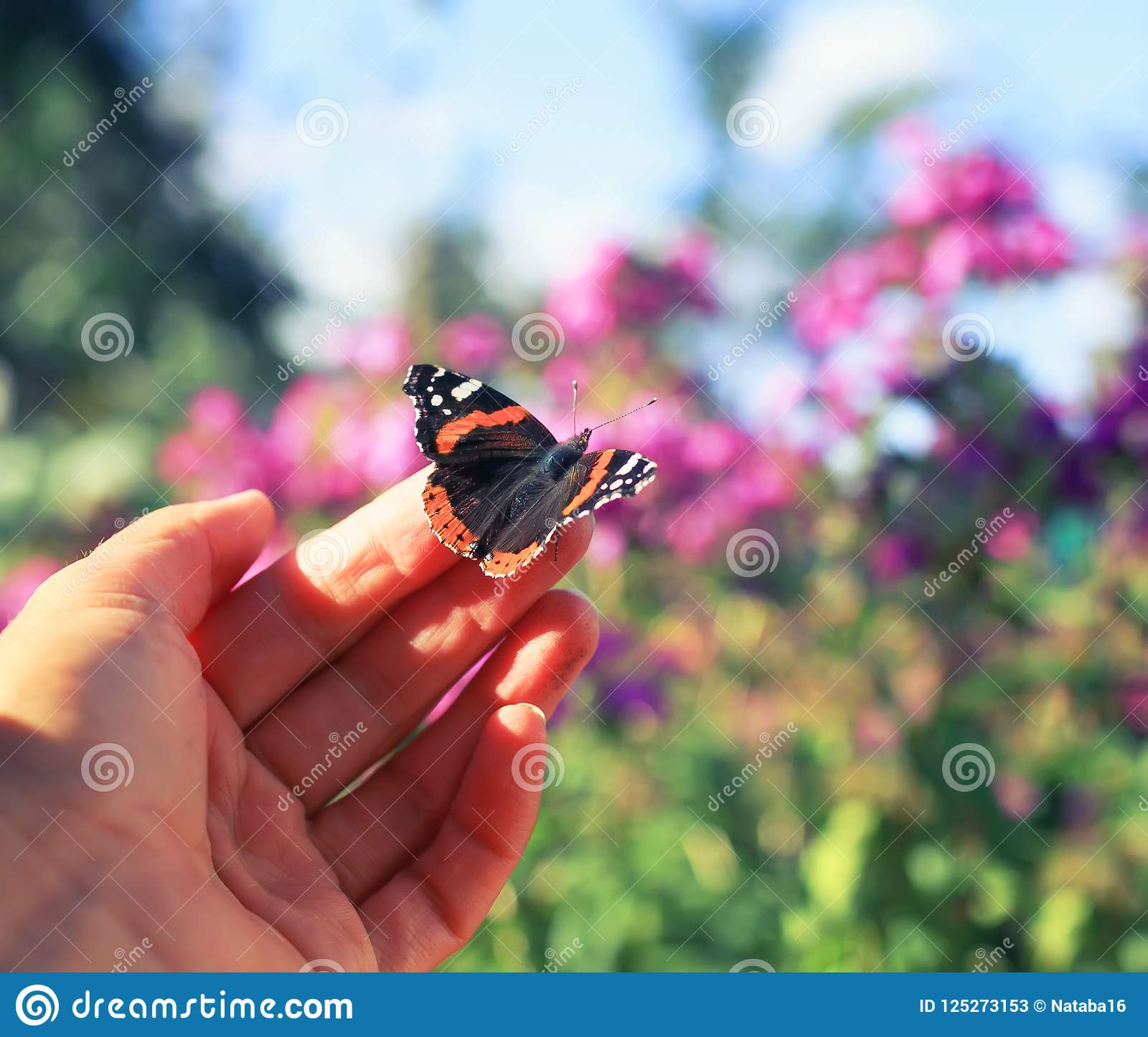 Orange butterfly sits on the fingers of a man`s hand and is goi