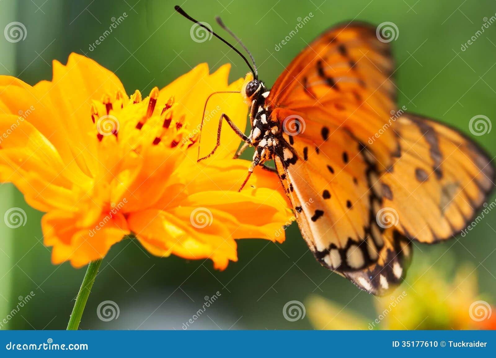 Nectar cards
