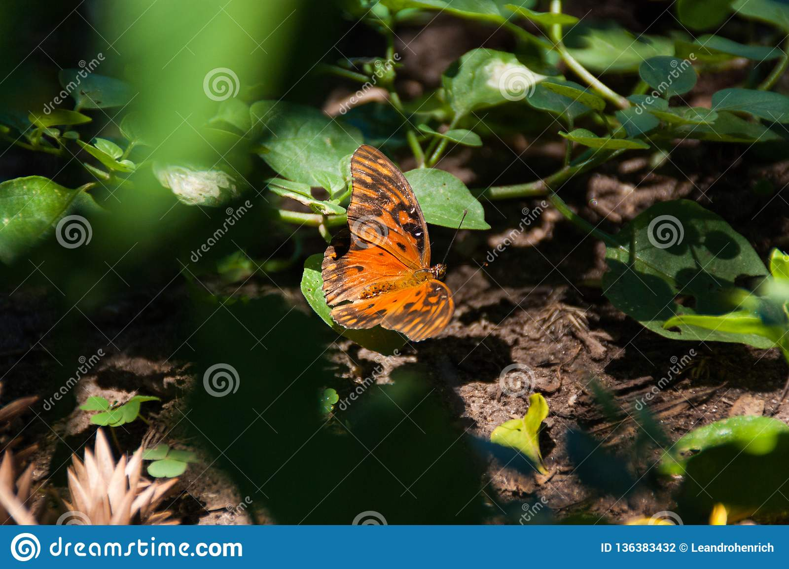 Orange butterfly standing at the garden