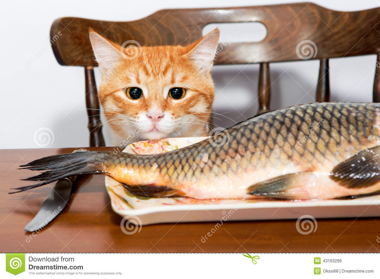 Orange cat and a big fish stock photo image 43163299 for Fish videos for cats