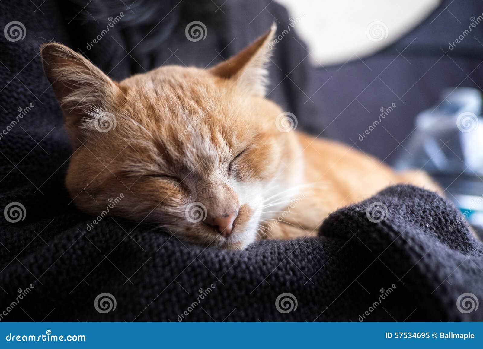 Orange cat sleeping in girl hug