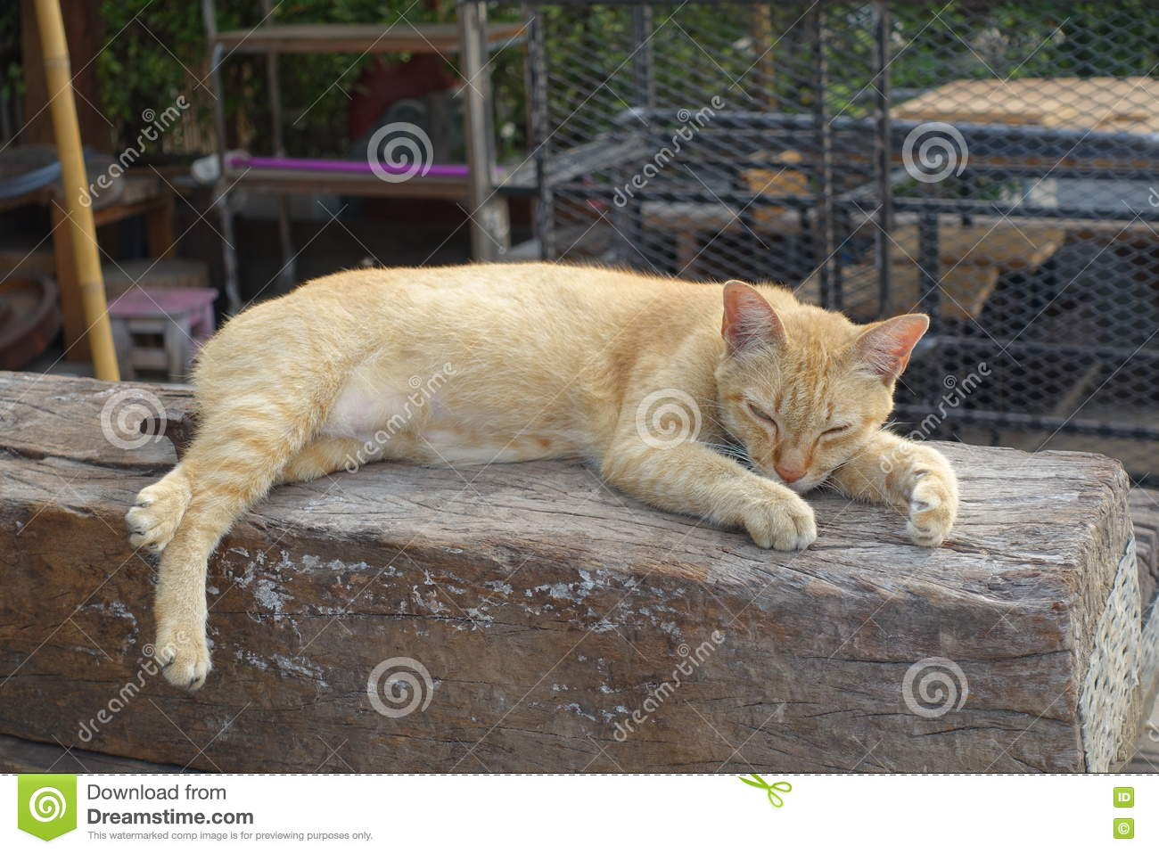 Orange cat is sleeping on the open air