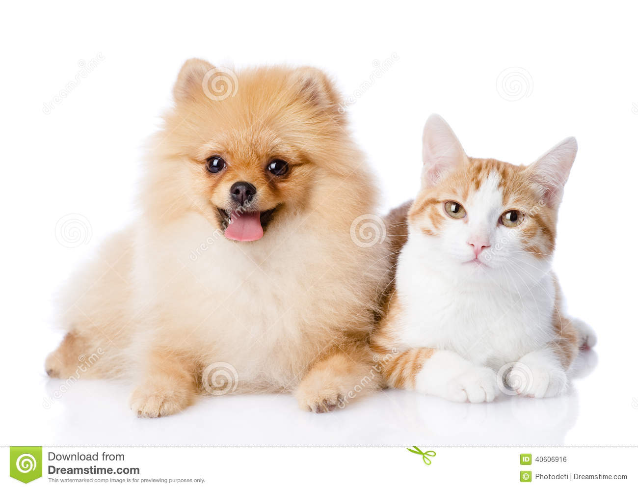 Cat Dog Breed Together