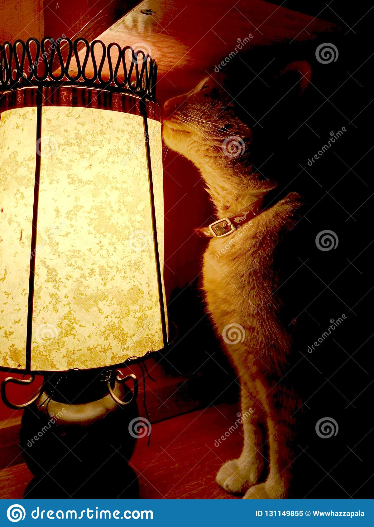 Yellow cat sitting next to lamp